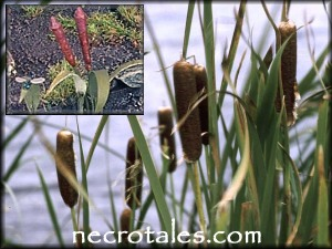 Real cat tails as they compare to the scratch built ones.